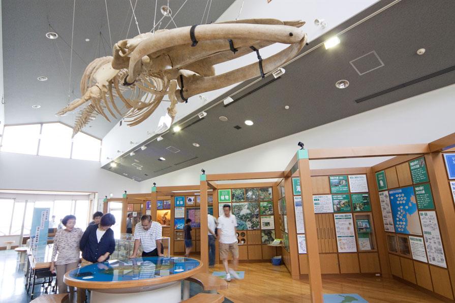 つのしま自然館
