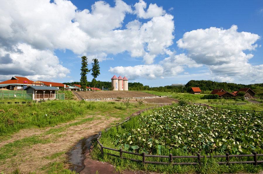 豊田農業公園みのりの丘